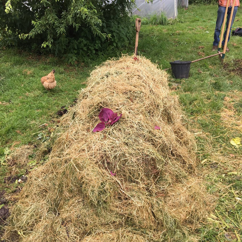 Trial pile with layer of hay