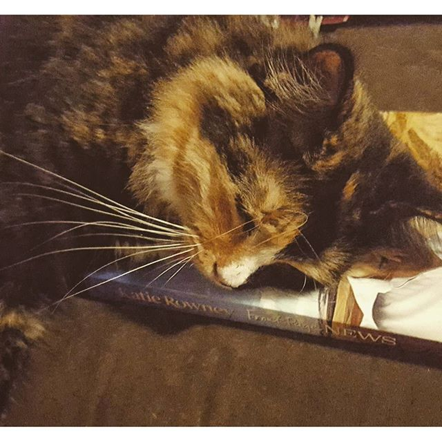 It doubles as a cat bed if you don't like the plot.