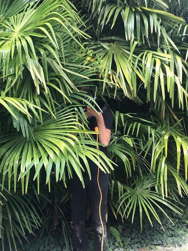 hiding and beeing a jungle photographer for the new edji campagne