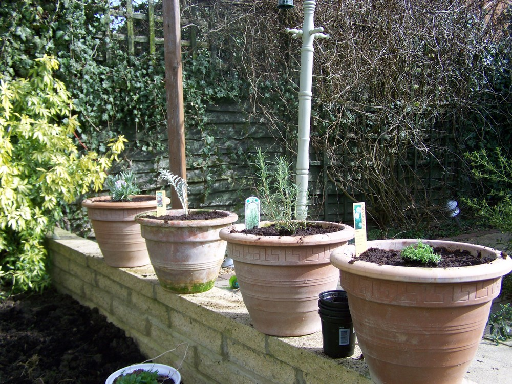 It's easy to grow herbs and plants in pots - you don't need lots of space!