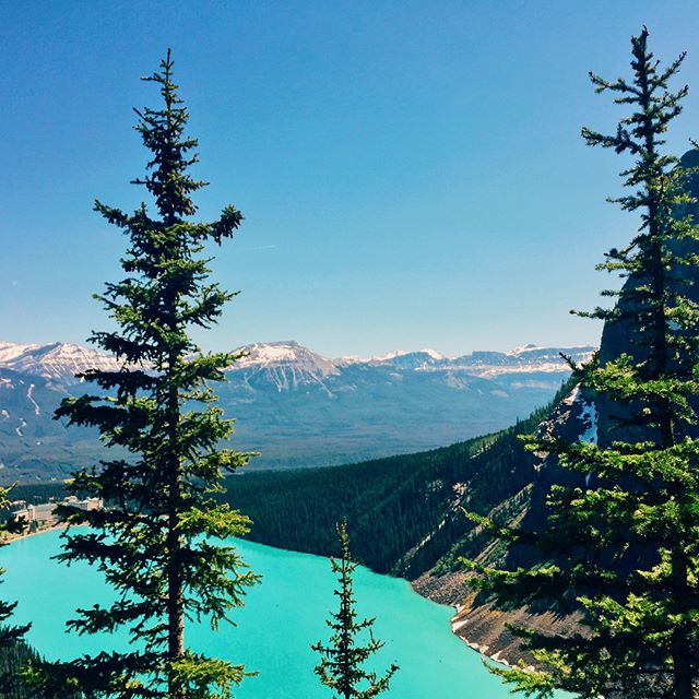 Lake Louise, you are spectacular. Hiked a sunny and steep 16km that involved clambering through a lot of avalanche debris. 🔛🔝