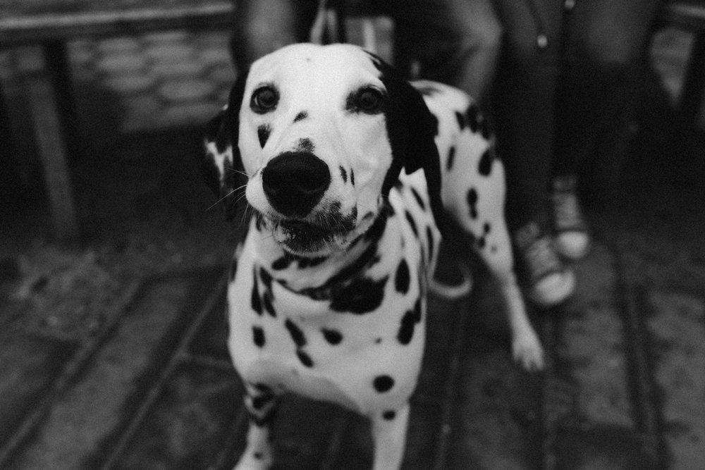 15. Dog-Laura+Tom_Pembrey-7.jpg