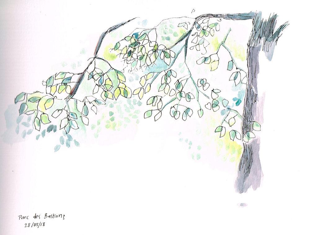 tree bastion.jpg