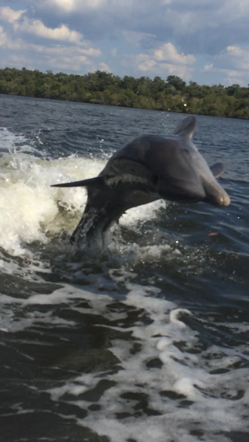 Dolphins-Eco-Nature-Tour-Naples-Florida-Bonita Springs-Estero-North Naples