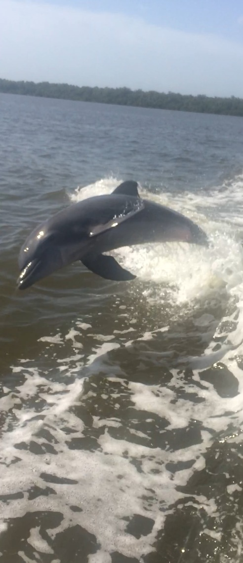 Dolphins-Eco-Nature-Tour-Naples-Florida-Bonita Springs-Estero-Private Charter