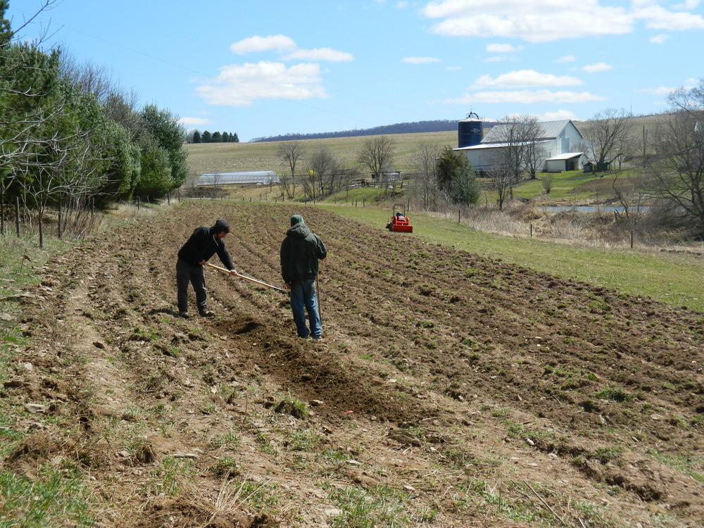 Breaking New Ground & Hand Planting Potatoes
