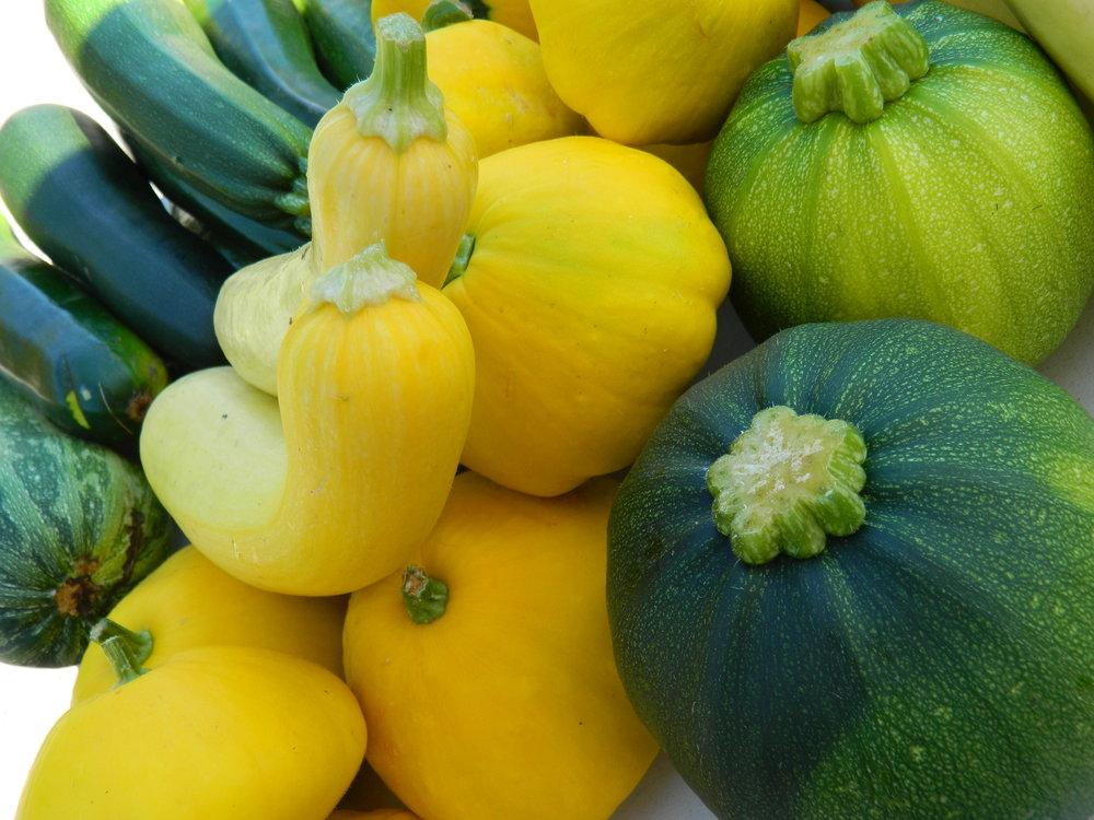 SUMMER SQUASH - Various Zucchini, Patty Pans