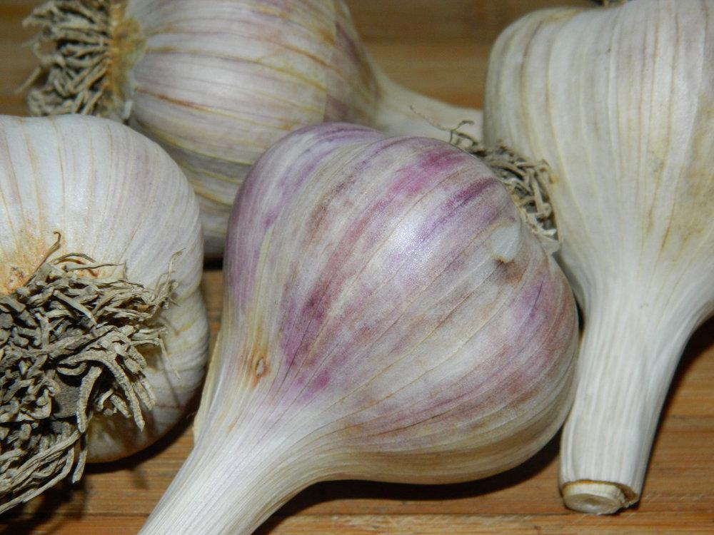 HERBS - Basils, Oregano, Cilantro, Dill, Garlic