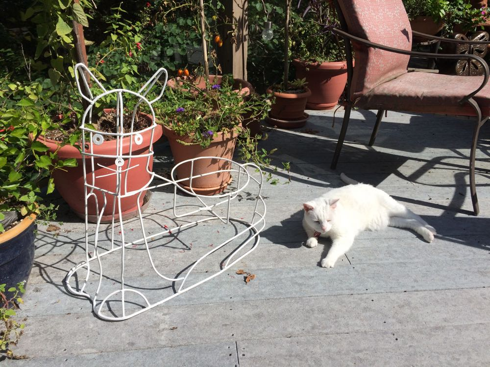 The white cat plant stand gift next to the inspiration for the color, Margaret my 18-year old cat.