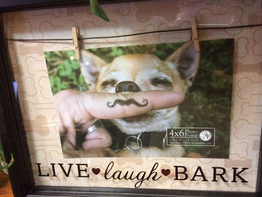 Live Laugh Bark photo.
