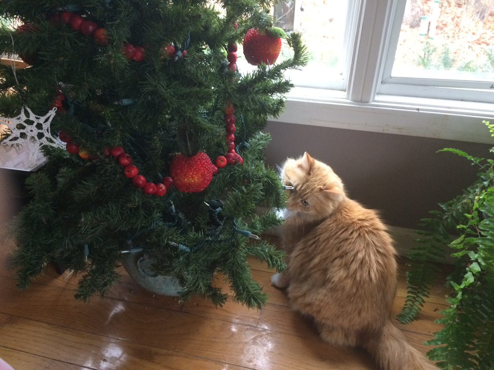 One of my cats checking out her first Christmas tree at Bluebird Gardens.