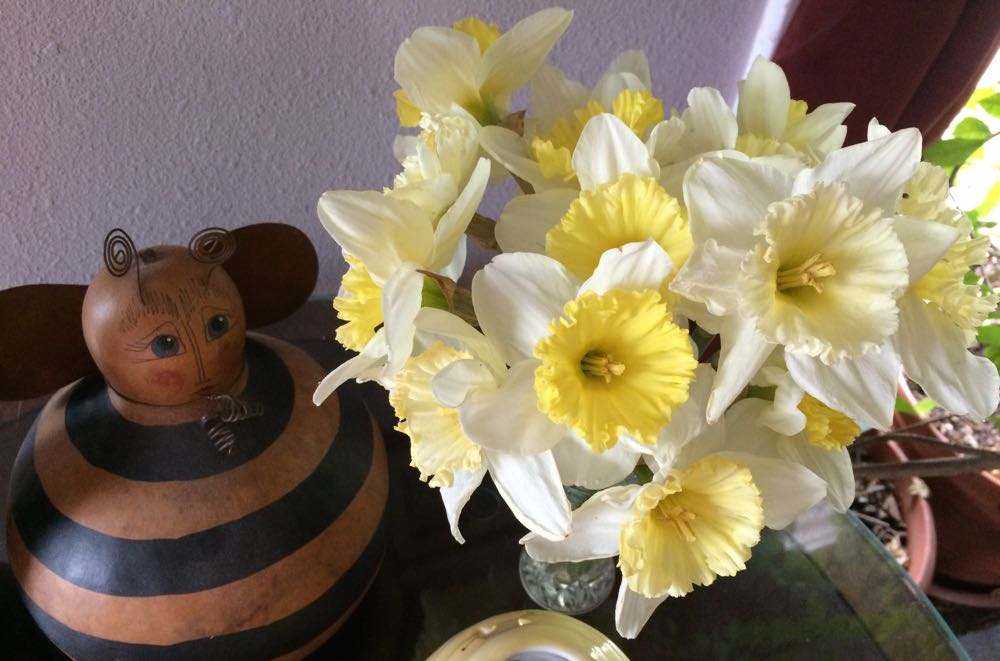 Daffodil bouquet inside, keeping my little bee gourd company where I can see both of them!