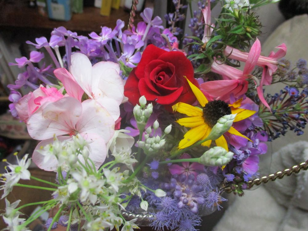 This was my first flower bouquet with salmon lobelia and one Black Eyed Susan flower.