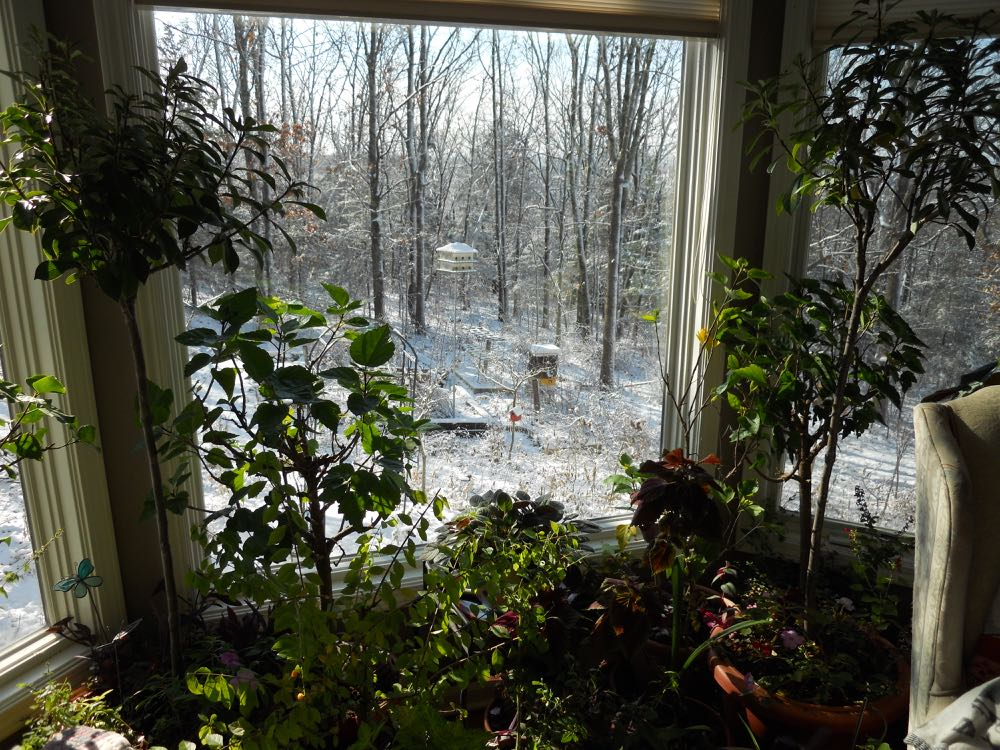 Plants fill bay window nook behind the chair, which I sometimes turn around to enjoy the view.