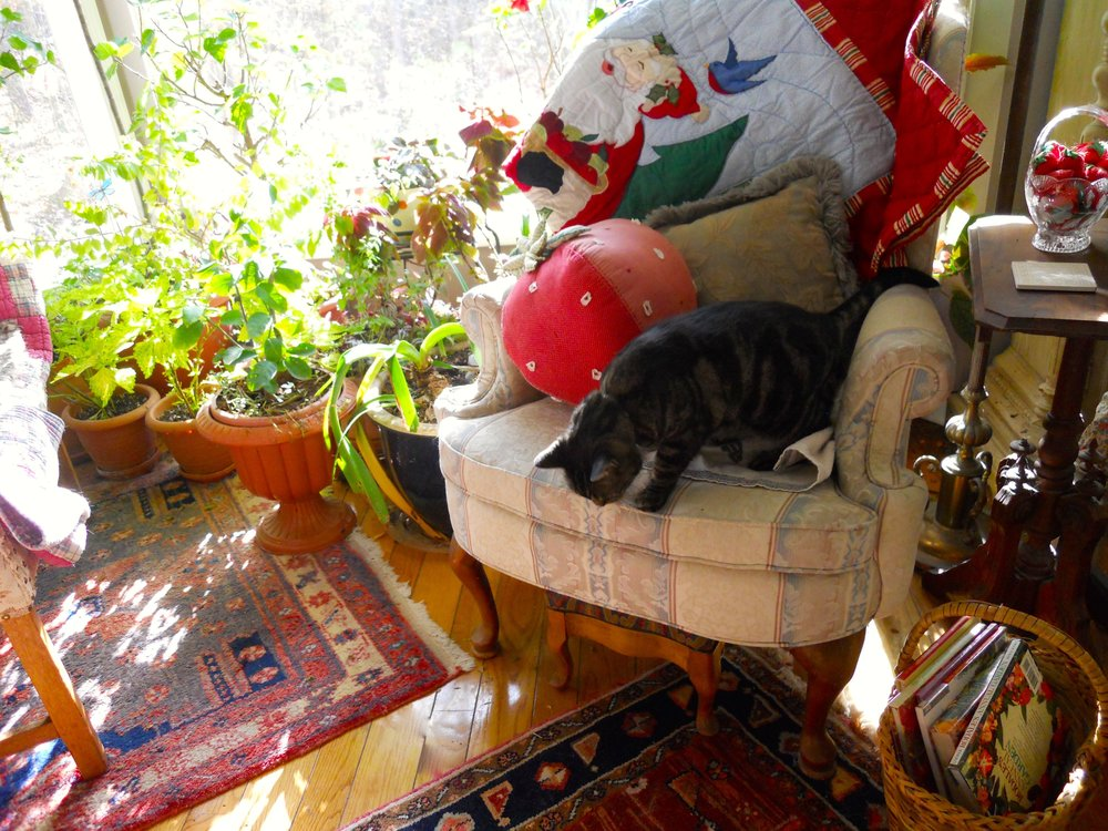One of the reading nooks in my living room bay window, the photo shoot interrupted a cat nap.