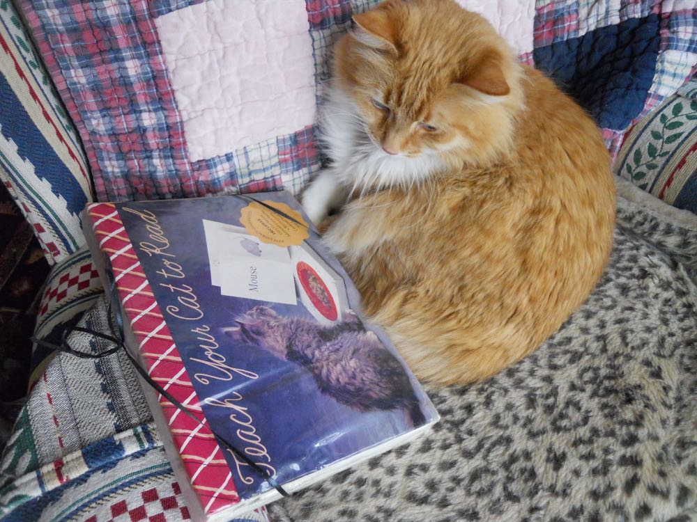 Some cats are known to enjoy not only napping but actually learning to read.
