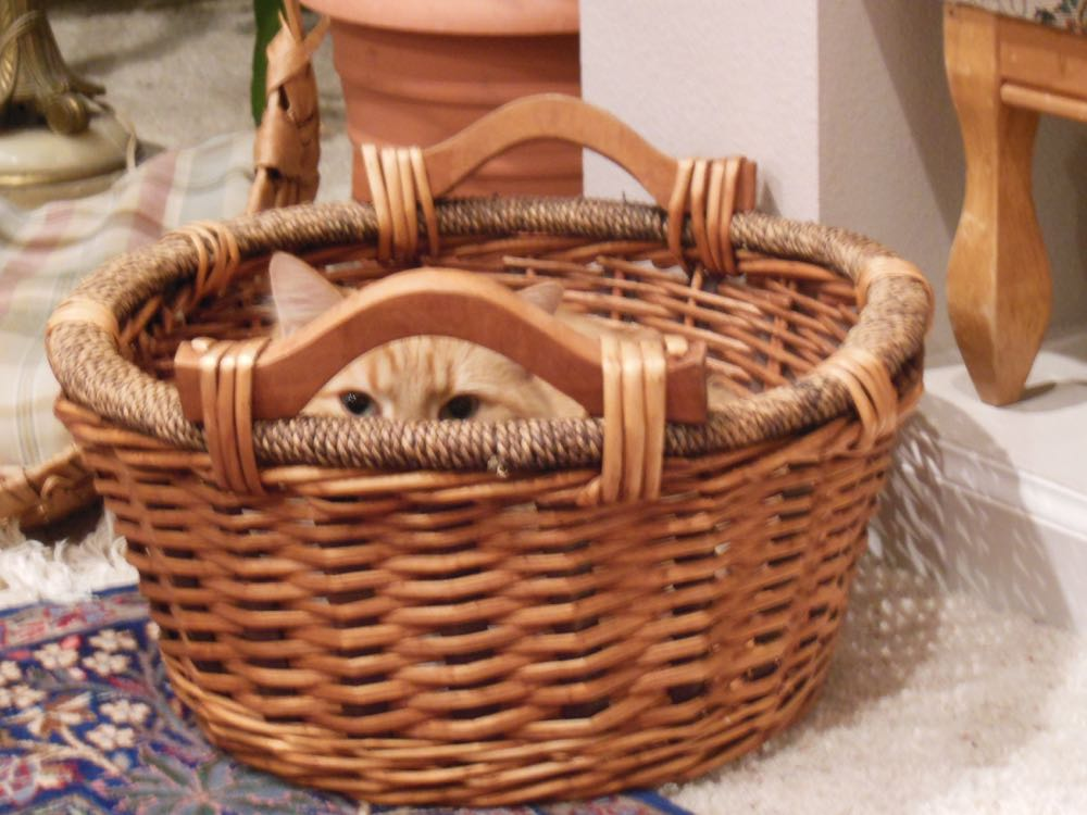 Reading nooks baskets hold magazines and books and cat reading nooks hold...well, you know.