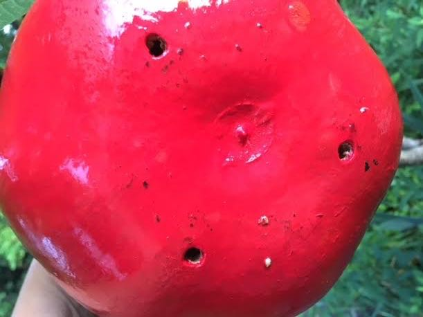 Drilling holes in the bottom help the gourds stay dry. (Photo by Charlotte Ekker Wiggins)