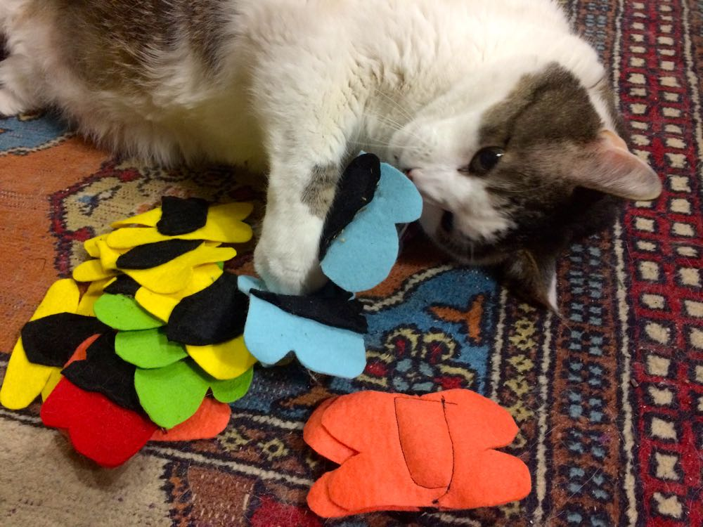 Bob testing a pile of butterfly catnip toys. (Photo by Charlotte Ekker Wiggins)