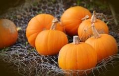 pumpkin640.jpg