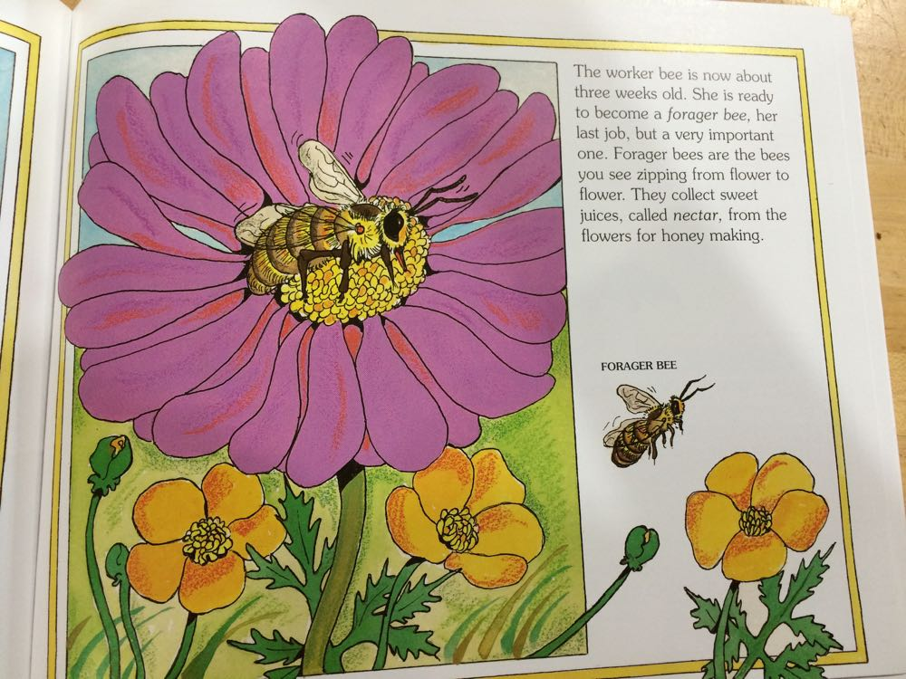 "A forager bee visits a flower in Gail Gibbon's ""The Honey Maker"" color illustrations."