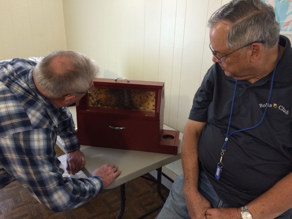 One of Rolla Bee Club's students checks out a visiting observation hive full of bees.