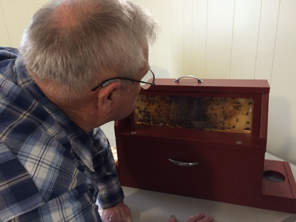 One of the favorite beekeeping past times, trying to locate the queen.