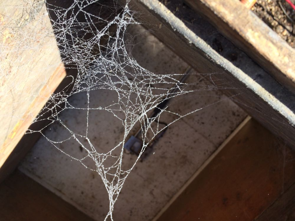 Test results? Oxalic acid vapors covered the left-over spider webs inside the old bee hive.