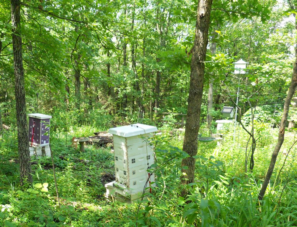 I am currently transitioning to 8-frame hives at Bluebird Gardens, easier to manage.