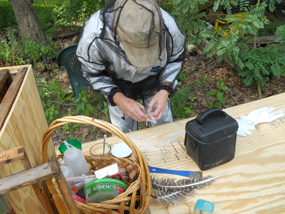 Kelly gets small hive beetle jails ready. Turkey feathers make a great tool for gently moving bees.