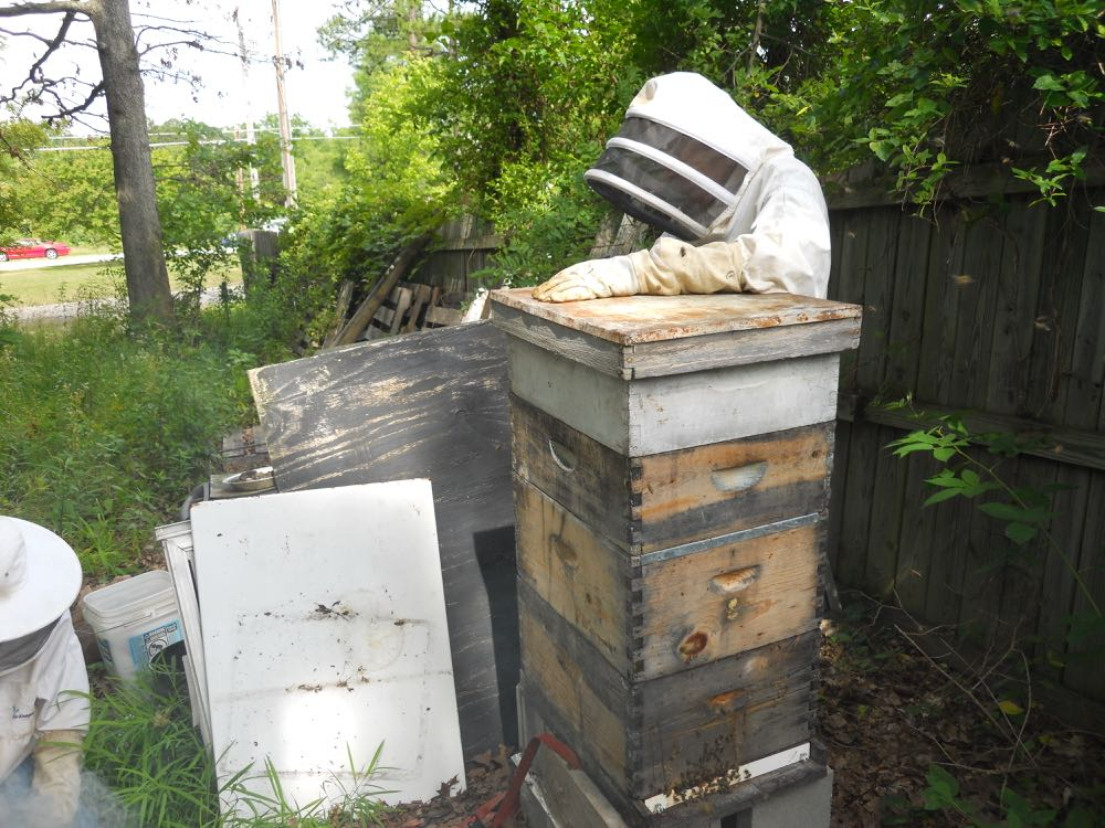 David Draker checks around the hive to make sure conditions are safe for a hive inspection.
