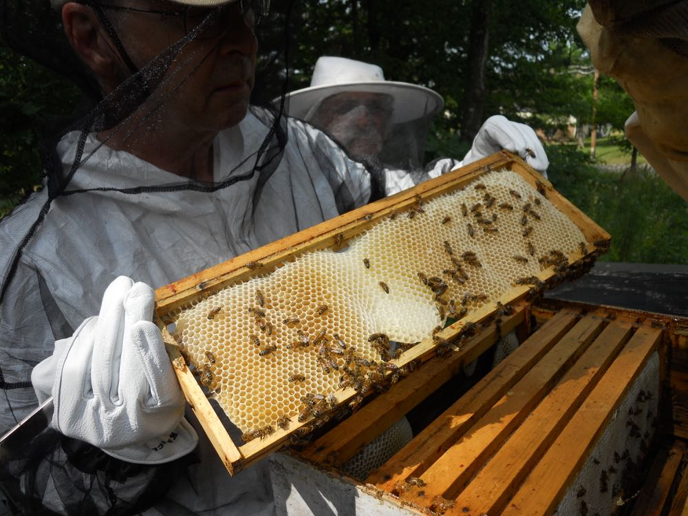 Kelly holds one of the frames from a top box where bees are pulling out new wax.