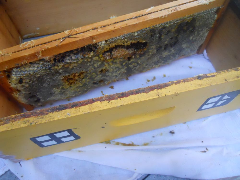 This was the last honey frame in the bottom box from a pile of six, 10 frame boxes.