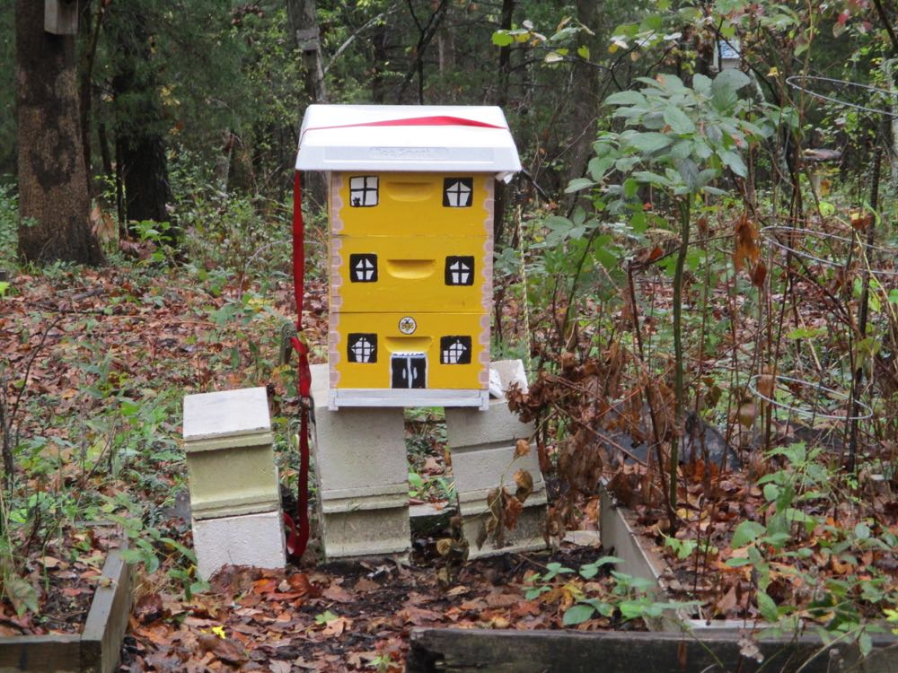 One of my hives, this one at the end of the vegetable garden before I fixed the concrete blocks.