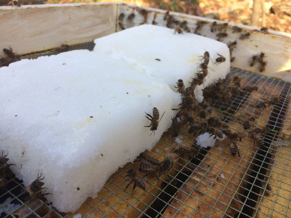 Another view of the honeybees on the emergency sugar cakes at the top of the hives.
