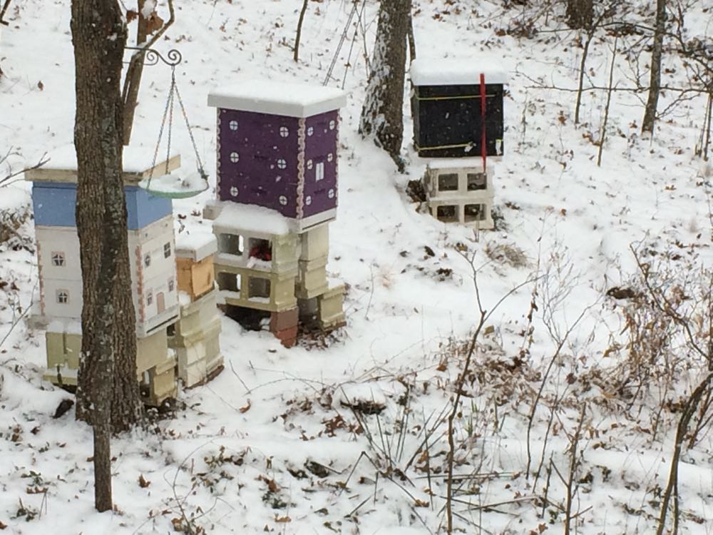 Last year, snow arrived before I had all of my hives wrapped, I beat the snow this year.