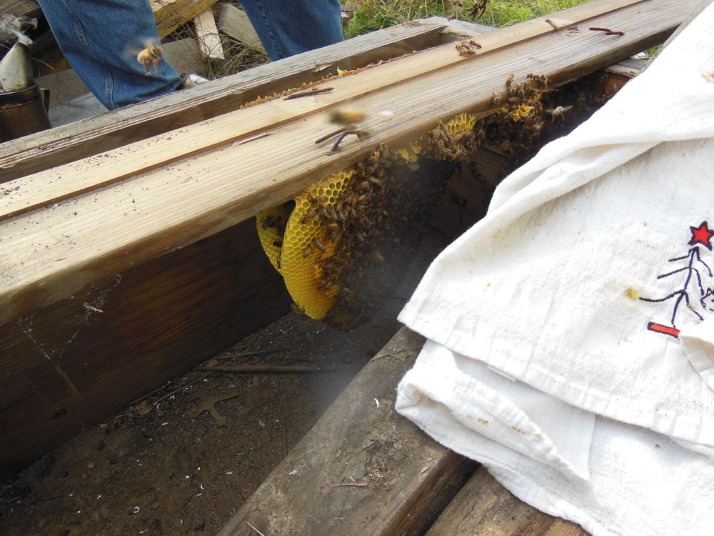 Honey bees built their wax comb on the bottom of the wood in the pile.