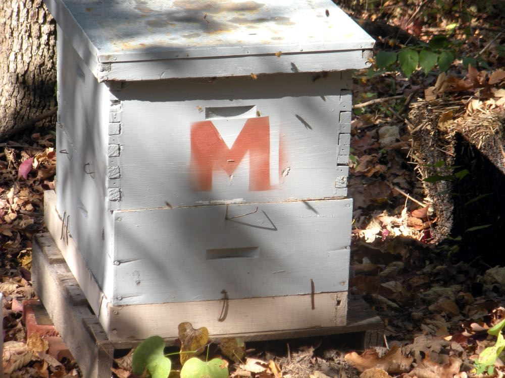 One of my first two hives I named after my mother, Gertrude, and my grandmother, Mildred.