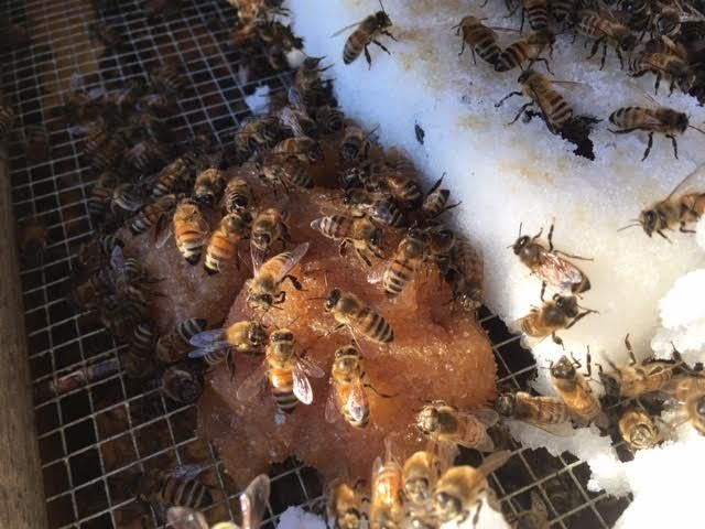 My bees now have both winter protein in winter pollen patties as well as sugar cakes for winter food. (Photo by Charlotte Ekker Wiggins)