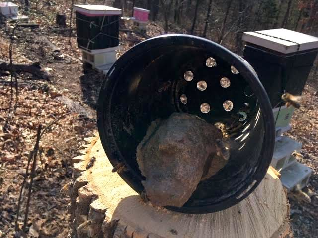 A rock will help anchor the plastic pollen pots. (Photo by Charlotte Ekker Wiggins)