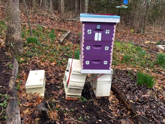 Winter heaving and thawing has started to tilt this hive in my bee garden. (Photo by Charlotte Ekker Wiggins)