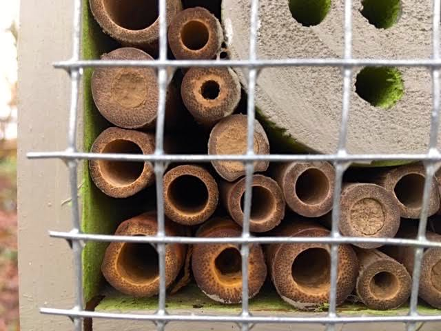 Native bees sealed into bamboo sticks in a native bee house. (Photo by Charlotte Ekker Wiggins)