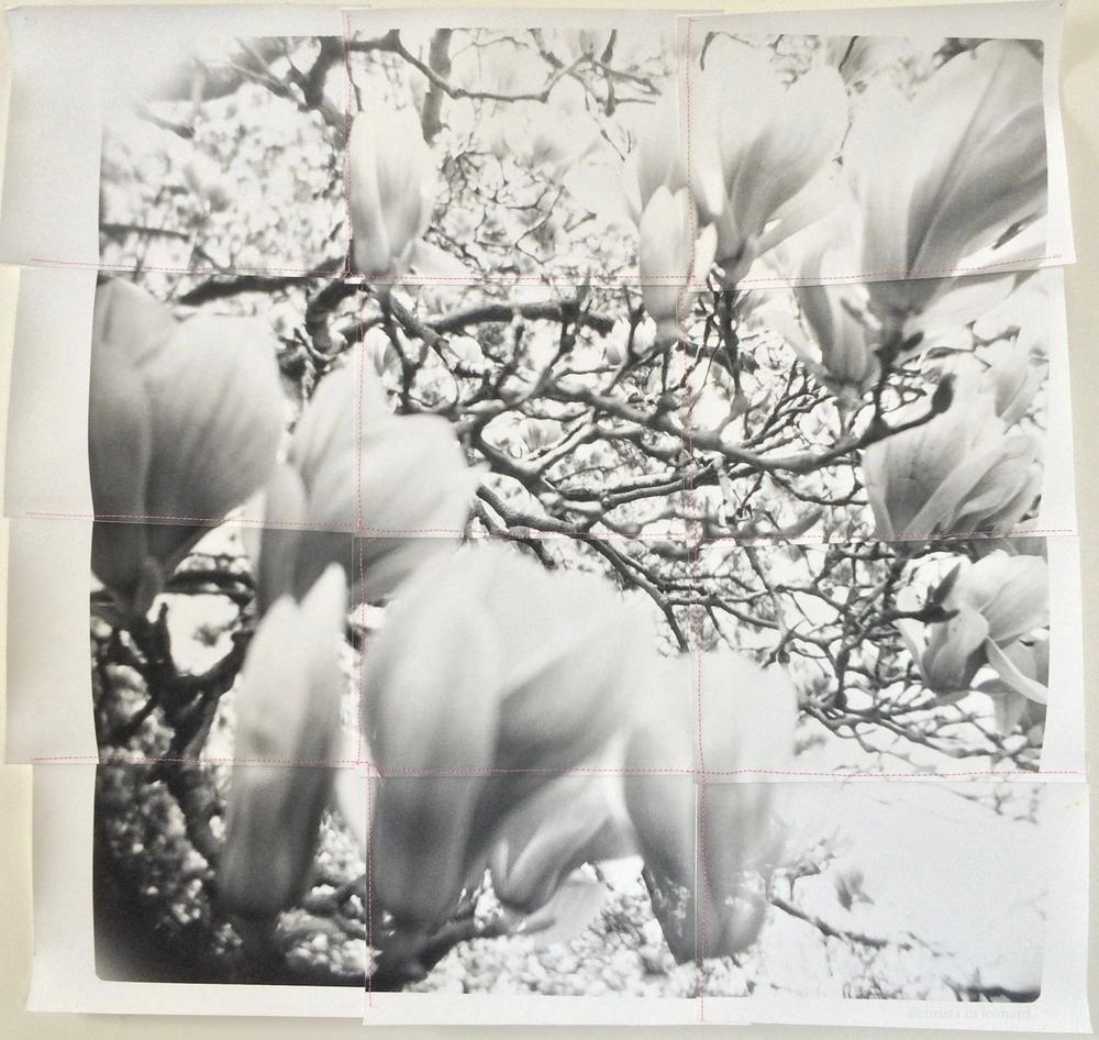 saucer magnolias 2, 2015