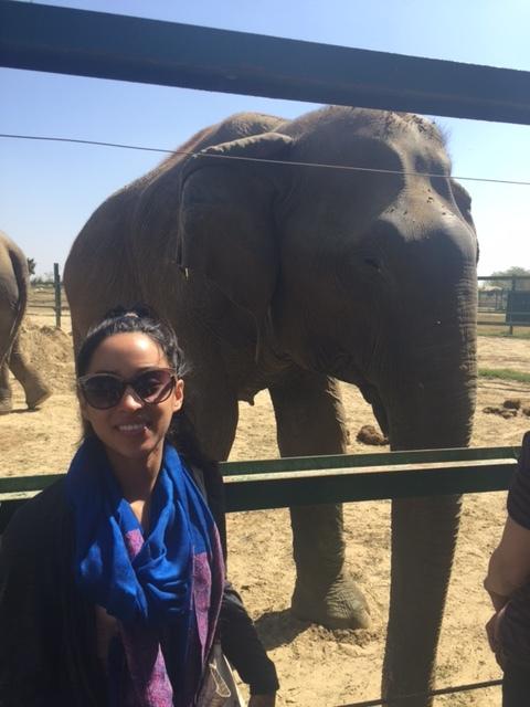 WIldlife SOS- Elephant Sanctuary