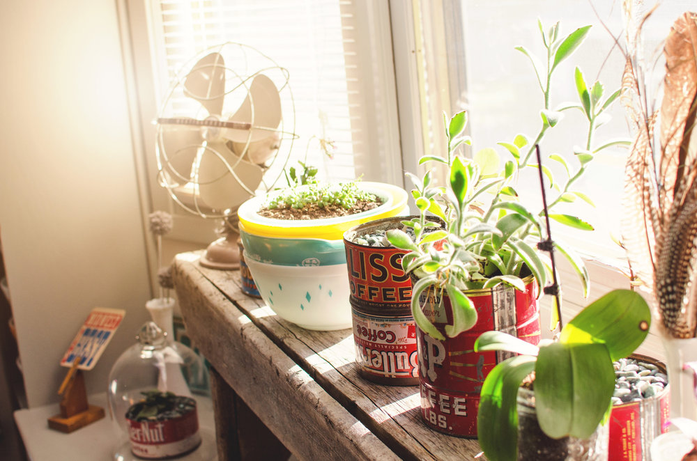 Vintage cans as planters. H.Prall & Co. | hprallandco.com