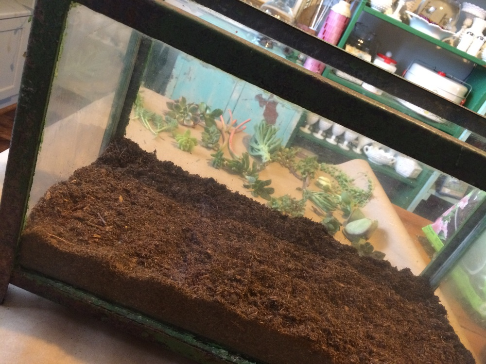 A layer of peat moss in an aquarium being used for a DIY terrarium project. || RustopiaConsulting.com