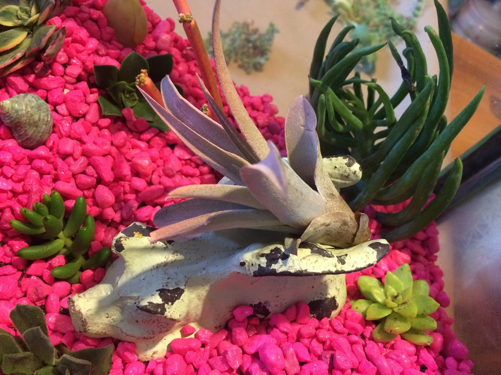 An air plant on top of a white rustic pig figurine on top of bright pink aquarium gravel in a DIY terrarium. || RustopiaConsulting.com