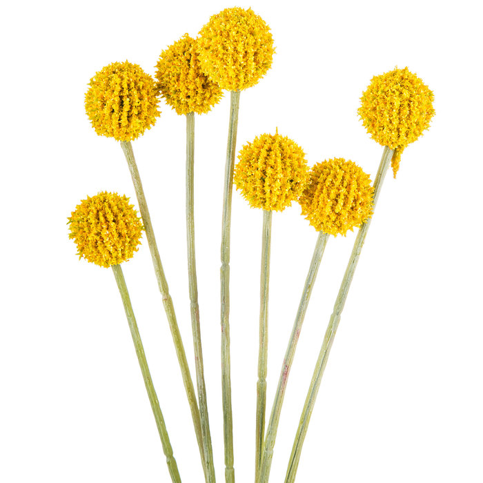 Yellow billy buttons on a white background | Blog post via RustopiaConsulting.com