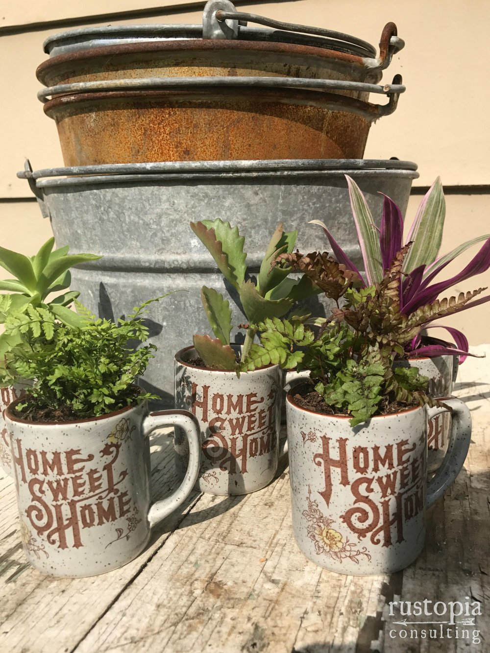 Three Home Sweet Home mugs as planters for mini plants. || RustopiaConsulting.com