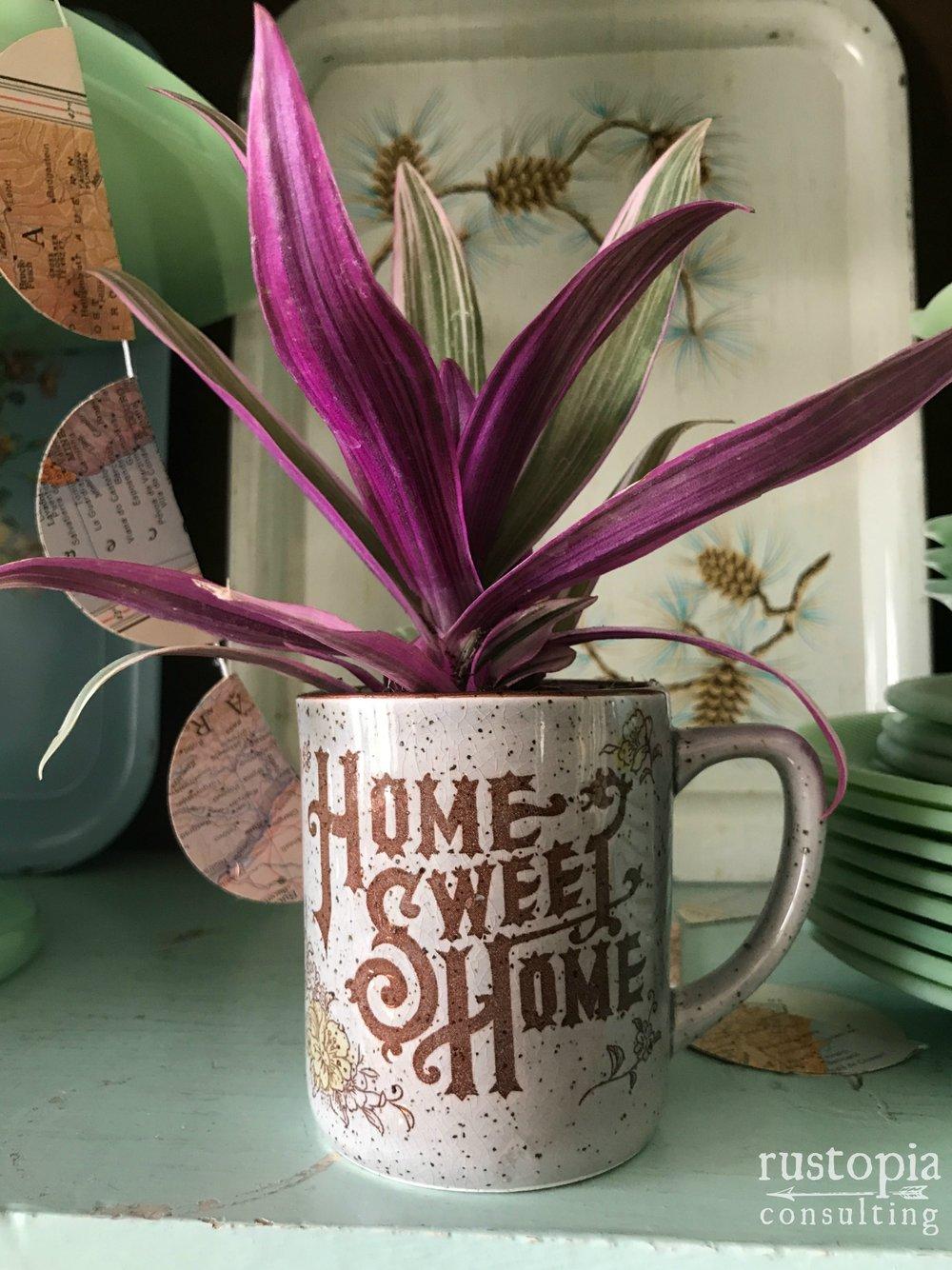 Home Sweet Home mug as a succulent planter.    RustopiaConsulting.com